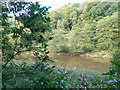 SO5308 : The River Wye by Eirian Evans