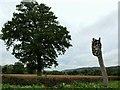 TQ2149 : Surrey Hills A.O.N.B. marker in Snowerhill Road by tristan forward