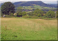 SO3319 : Meadow at Pant-y-tyle - 2 by Trevor Rickard