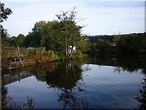 SE2837 : A fishing pond at Meanwood, Leeds by Ian S
