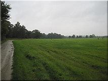 SE7170 : Track  towards  Coneysthorpe by Martin Dawes