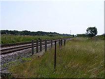 TM4598 : Norwich-Lowestoft railway near Haddiscoe station by Glen Denny