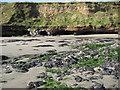 SW9038 : Undercut cliff, Pendower Beach by Philip Halling