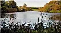 J4846 : The Quoile, Downpatrick (2) by Albert Bridge