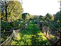 NZ0863 : Allotments, Ovingham by Andrew Curtis