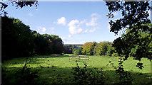 SJ8959 : Looking down the pasture by Jonathan Kington