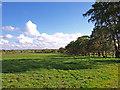 NS4249 : Tree lined Field by wfmillar