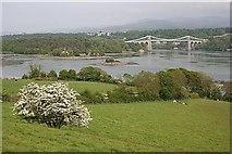 SH5571 : Pont Grog y Borth (Menai Suspension Bridge) by Anne Burgess