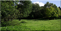 SJ8959 : Looking up the pasture by Jonathan Kington