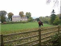 NY8563 : Horse and Threepwood Hall by Joan Sykes