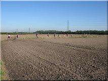 TR3256 : Track through farmland to the north of Felderland Lane by Nick Smith