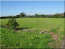 TR3156 : Field near Buckland Farm by Nick Smith