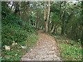 SH2328 : A woodland walk at Plas yn Rhiw by Eric Jones