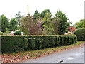 TG1439 : A hedge with a difference by Evelyn Simak
