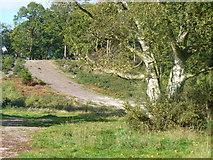TQ1460 : Oxshott Heath by Colin Smith