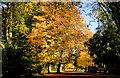 J3472 : Ormeau Park, Belfast (10) by Albert Bridge