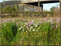 SE2932 : Wild flowers and graffiti by Ian S