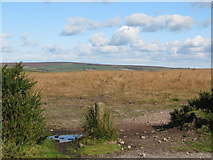 SS8429 : West Anstey Common by Sarah Charlesworth