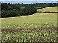 SU7345 : Farmland, Long Sutton by Andrew Smith