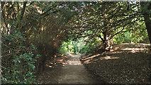 SJ8959 : Under the Yews by Jonathan Kington
