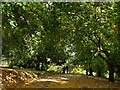 ST3087 : Walking the dogs in Belle Vue Park by Robin Drayton