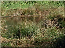 TL0536 : Pond by Dennis simpson