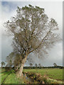 TM4391 : Willows against a slate grey sky on Beccles marshes by Adrian S Pye