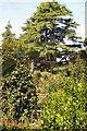 SW6430 : Trevarno Gardens by David Dixon