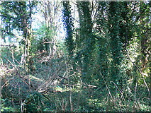 TQ1977 : Kew Riverside Park by Eirian Evans