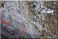 SK7605 : Jurassic Belemnite by Ashley Dace