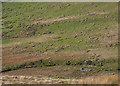 SH6208 : Sheepfolds by the Afon Gwril by Nigel Brown