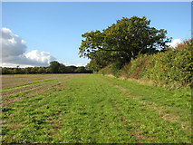 TM3995 : Public footpath to Hales by Evelyn Simak