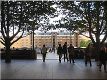 TQ3780 : Under the trees at West India Dock North by Rod Allday