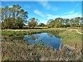 NZ3215 : Pond beside Feeder Road to A66, Darlington by Paul Buckingham