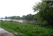 TQ1773 : Horse Reach, River Thames by N Chadwick