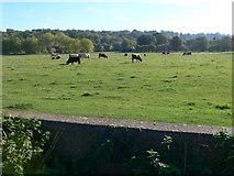 TQ1773 : A rural scene in London by Eirian Evans