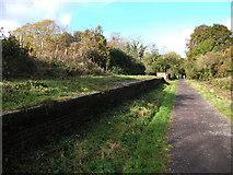 ST9102 : Spetisbury Halt, abandoned platform by michael ely