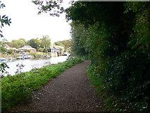 TQ1673 : The Thames Path at Eel Pie Island by Eirian Evans
