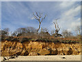 TM5382 : Tree killed by salt spray near Benacre Broad by Adrian S Pye