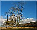 NT1096 : Dowhill Muir by William Starkey