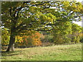TQ5942 : Autumnal Tree at Barnett's Wood Nature Reserve by Oast House Archive