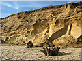 TM5281 : Remains of dead trees, Covehithe Cliffs by Evelyn Simak