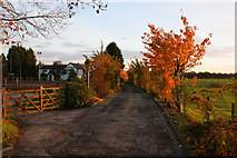 SJ6298 : A track south from Byrom Lane by Ian Greig