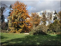 TQ1776 : Trees near Queen Charlotte's cottage by Paul Gillett