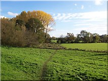 SO8252 : Fields near the River Teme by Andrew King