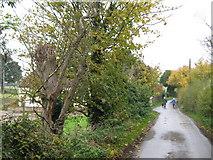 TR2648 : Long Lane past Long Lane Farm by David Anstiss