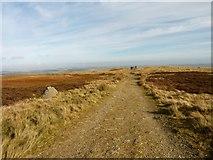 NO2006 : Hillwalker's path by James Allan