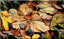 J4846 : Autumn leaves, Downpatrick (2) by Albert Bridge