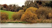 J4846 : Riverbank, Downpatrick by Albert Bridge