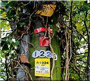 J3996 : Telegraph pole, Gleno by Albert Bridge